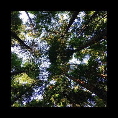 trees-transparent